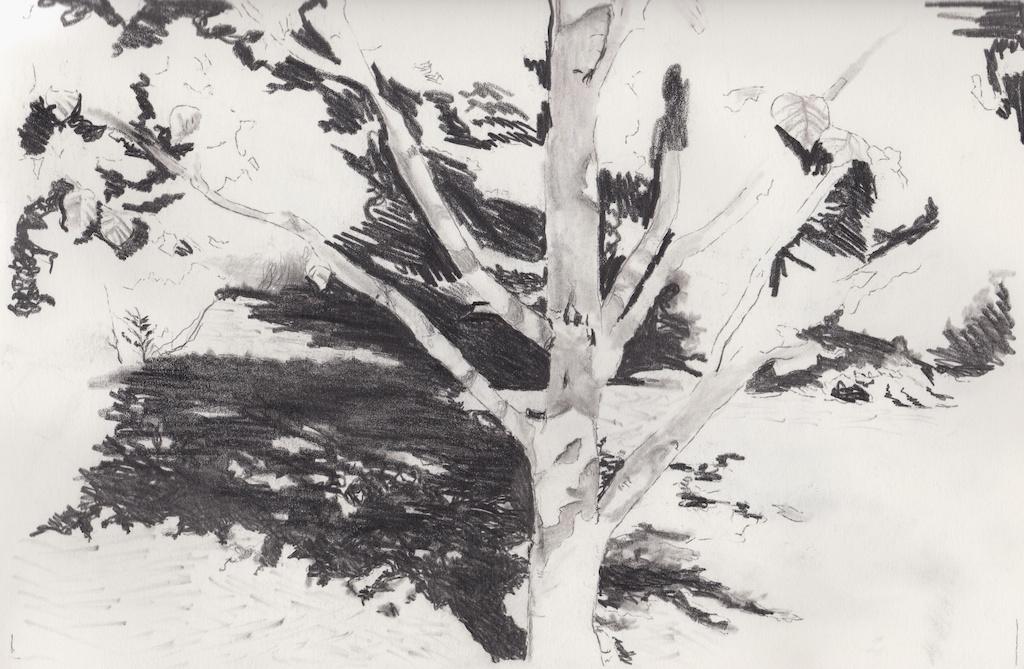 Monochrome, Landscapes